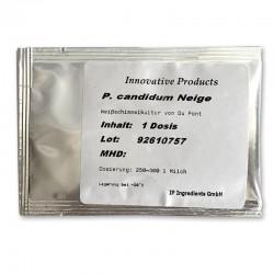 P. Candidum witschimmel 1...